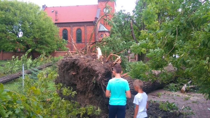 Nawałnica wyrwała drzewo razem z korzeniami