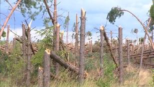 Potrzeba 100 lat, by zniszczone lasy powróciły do stanu sprzed nawałnic