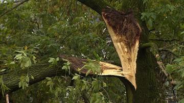 04-06-2017 21:10 Pozrywane dachy, połamane drzewa. Nawałnice nad Polską