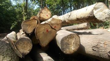 06-06-2017 16:12 Nowe stawki opłat za usunięcie drzew i krzewów