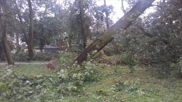 2017-08-12 Krajobraz miasta po burzy. Powalone drzewa w centrum Nakła