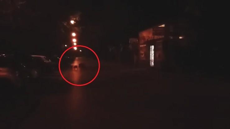2017-08-02 Kilkanaście młodych dzików i trzy dorosłe biegało po ulicach Warszawy