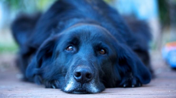 Radom bezpłatnie znakuje psy