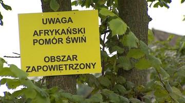 29-08-2016 18:25 Podlaskie chce skutecznej walki z pomorem świń. To myśliwi mają ograniczyć liczbę dzików