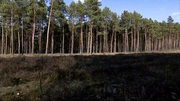 Spod ziemi w lesie wystawały nogi kobiety. Prokuratura: zabójstwo