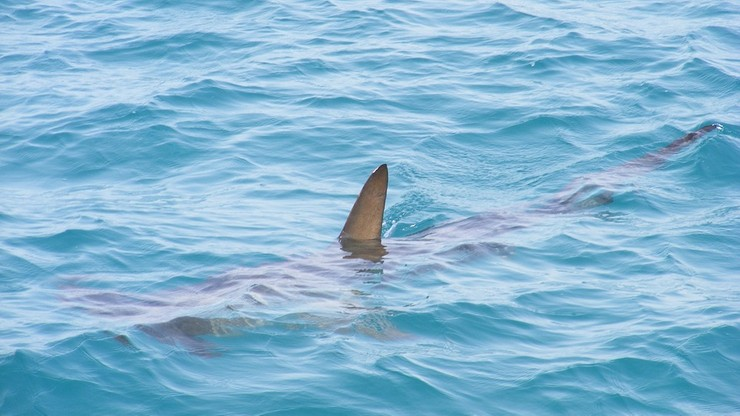 Drony wykrywające rekiny będą patrolowały wybrzeża w Australii