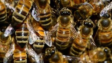 19-12-2016 05:44 Pszczoły żyją na warszawskich centrach handlowych