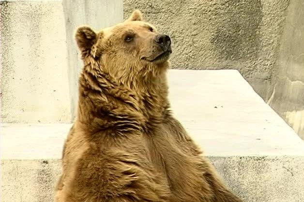 W Beskidach obudził się niedźwiedź. Wiosna coraz bliżej!