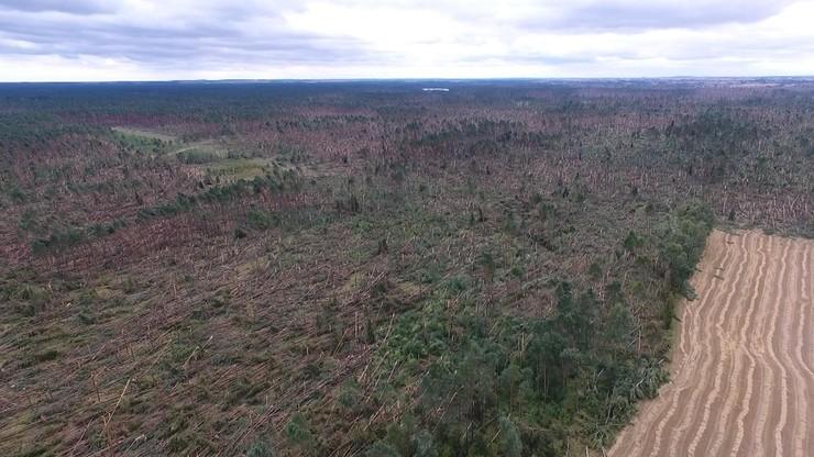 Lasy Państwowe: straty w drewnie opiewają na 6,6 mln metrów sześciennych