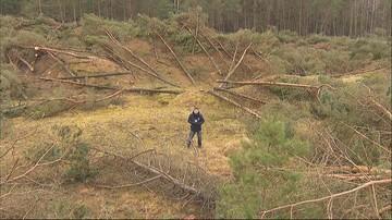 """01-03-2017 15:29 W Łebie wycięto kilkaset drzew. """"To jest rzeź"""""""
