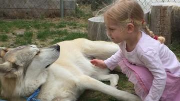 """20-09-2017 13:27 Pies-terapeuta zabity przez myśliwego. """"Wziął go za wilka"""""""