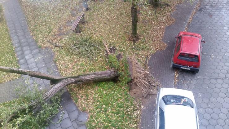 Silny wiatr powalił drzewo przy ul. Parkowej w Nysie (Opolskie)