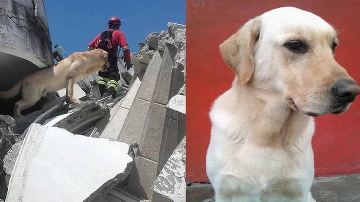 """Pies uratował 7 osób, a potem zmarł z wycieńczenia. """"To bohater"""""""
