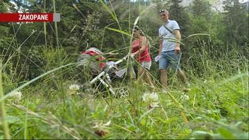 18-07-2017 19:37 Uwaga na żmije w Tatrach! Odnotowano pierwsze przypadki ukąszeń