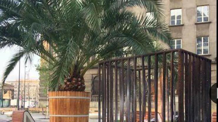 Na Rynku w Katowicach stanęły koksowniki. Bo przymrozki mogły zagrozić palmom