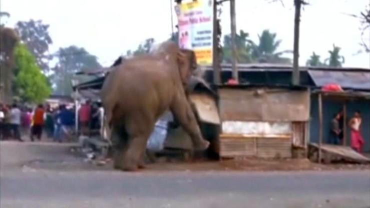 Słoń zdemolował miasto w Indiach. Zniszczył domy i samochody