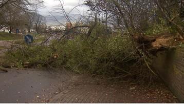 Orkan Grzegorz nadciąga nad Polskę. Będzie łamać drzewa i zrywać linie energetyczne