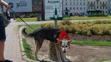 07-07-2016 10:17 Pi(e)suary dotarły do Warszawy. Rozwiązanie na psie nieczystości?