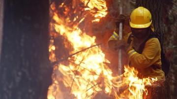 27-01-2017 22:59 Dramatyczna walka z ogniem w Chile. Lasy ciągle płoną