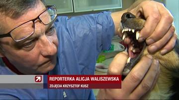 Kłopoty weterynarza z Wrocławia. Okradają go chuligani