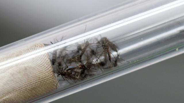 Wenezuela: 319 zarażonych wirusem Zika, 3 ofiary śmiertelne