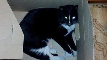 28-02-2016 09:59 Ktoś odciął kotu przednie łapki i ogon. Zwierzę konało w męczarniach