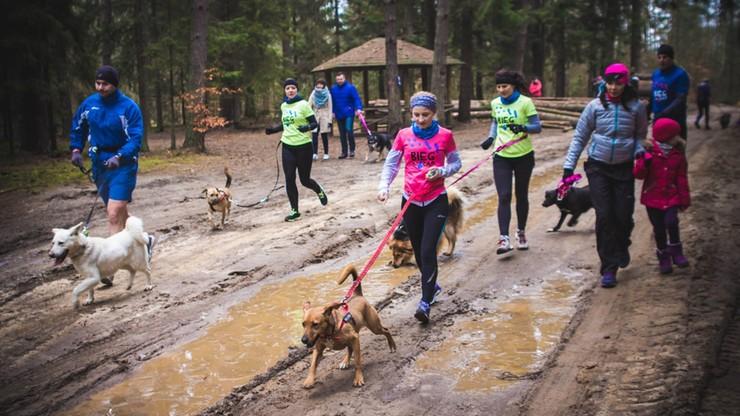 """Biegają, żeby pomóc psom ze schroniska. """"Bieg na sześć łap"""" coraz popularniejszy"""