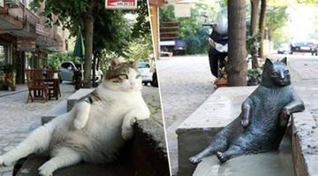 2016-10-04 Kot - gwiazda internetu, teraz ma swój własny pomnik