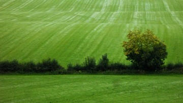 76,6 tys. hektarów ziemi sprzedała w 2015 roku Agencja Nieruchomości Rolnych