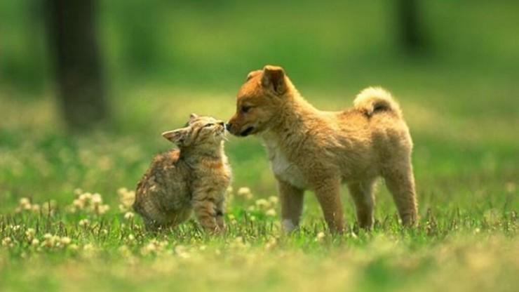 We Włoszech kwitnie przemyt psów i kotów