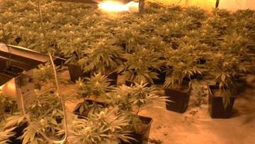Prowadzili plantacje marihuany. Do ich doglądania zatrudnili Wietnamczyka