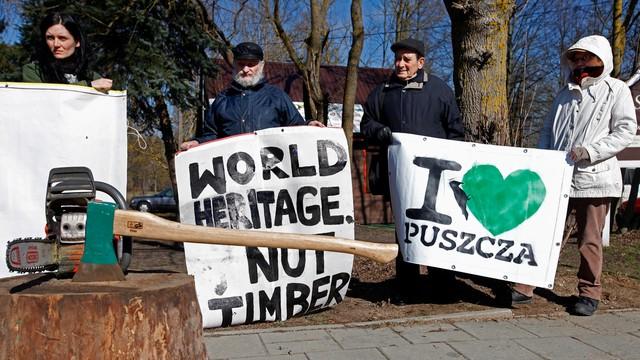 Jest decyzja ws. Puszczy Białowieskiej. Wycinki w ramach walki z kornikiem