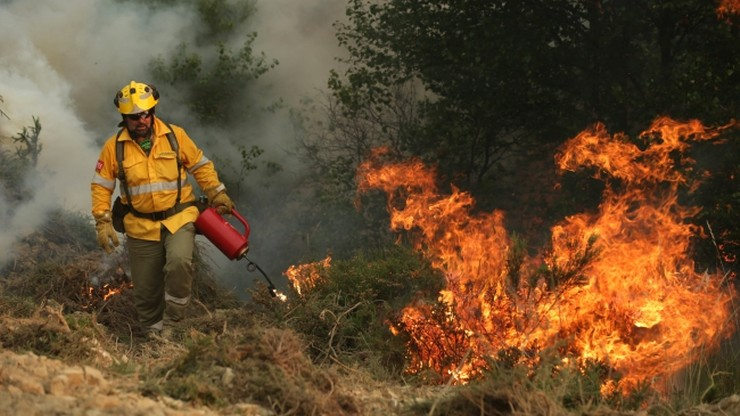 Portugalia: główne ogniska pożaru lasów opanowane