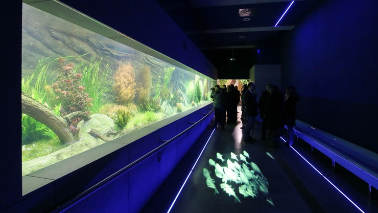 Akwarium w warszawskim zoo już po remoncie. Otwarcie 6 grudnia