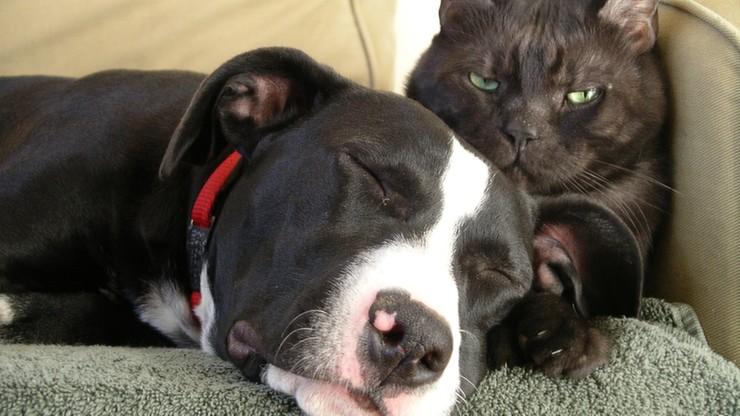 Naukowcy twierdzą, że psy są mądrzejsze od kotów. Bo mają więcej neuronów