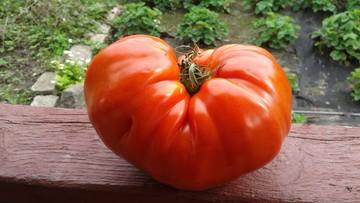 2017-09-06 Duża, smaczna malinówka z ogródka w Zachodniopomorskiem