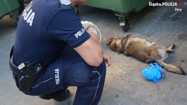 Martwy pies w kontenerze na ubrania. Jego pysk był owinięty taśmą. Policja szuka sprawcy