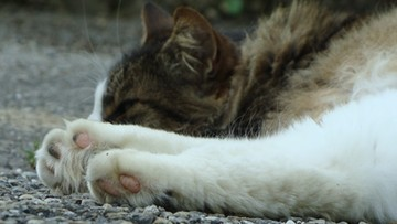 24-08-2017 18:05 Wyładował agresję na małym kocie. Podczas awantury domowej rzucił zwierzęciem w dach budynku