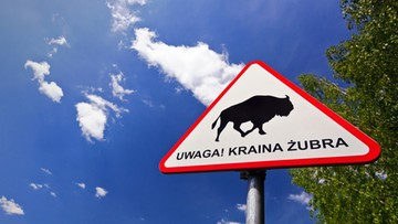"""27-05-2016 09:23 Turysto""""Uwaga! Kraina Żubra"""""""