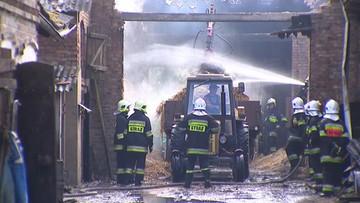 Piorun uderzył w stodołę. Spłonęło ok. 30 zwierząt