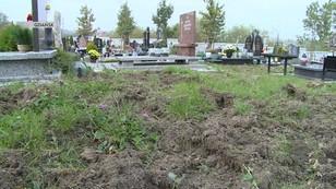 Dziki niszczą gdański cmentarz