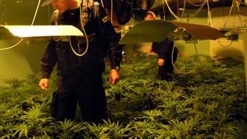 25-10-2016 09:06 Warszawska policja przejęła 900 krzewów konopi i ponad 20 kg marihuany