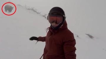 11-04-2016 15:42 Niedźwiedź gonił snowboardzistkę, a ona nagrywała
