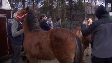 Obrońcy praw zwierząt planują wykup koni na targach w Skaryszewie