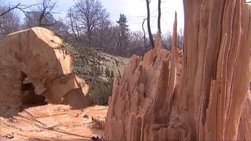 08-03-2017 16:38 Ponad 1 mln zł kary za nielegalną wycinkę drzew. Zapłaci deweloper