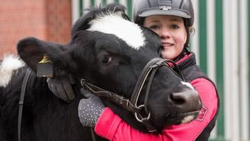 19-03-2017 12:50 Tata nie chciał jej kupić konia, więc dziewczynka wytresowała krowę