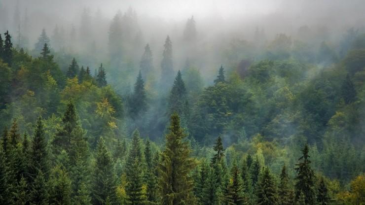 Austriacki koncern nielegalnie wycina rumuńskie lasy