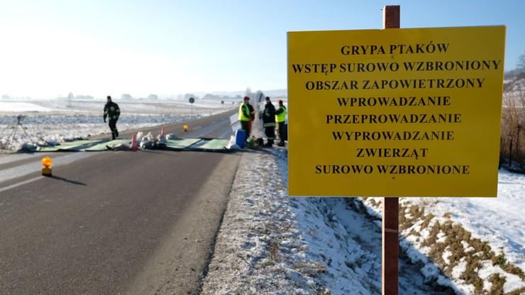 Małopolska: zlikwidowano ogniska ptasiej grypy