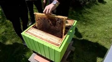 Pszczoły masowo wymierają.