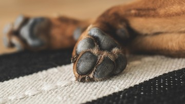 28-08-2017 14:48 Osiem miesięcy więzienia za zabicie psa ze szczególnym okrucieństwem. Po kasacji nadzwyczajnej